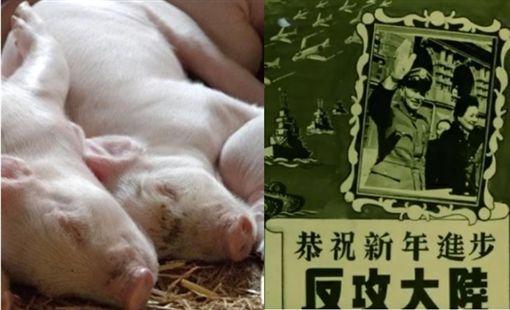 非洲豬瘟大陸網友反應 微博