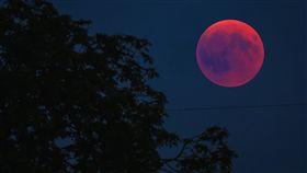 超級血狼月,天文,奇景,以色列,月蝕,月亮,猶太教,細罷特月,垮台,衝突,預言 圖/翻攝自Pixabay https://goo.gl/tjTvTF