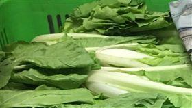 台北市衛生局公布今(2018)年9月生鮮蔬果殘留農藥抽驗結果。蚵白菜(圖/台北市衛生局提供)