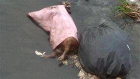 彰化北斗鎮八堡二圳內三排水「新星橋」有動物屍/翻攝自臉書我是北斗人