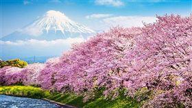 極光,賞櫻,日本。(圖/易遊網提供)