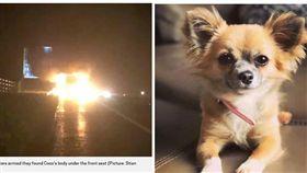 說明 忠犬為救主人喪生火海 女主人心碎:真希望牠沒回去救我 圖/翻攝metro