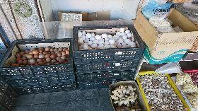 老母雞苦撐生蛋  雞蛋價創新高(1)