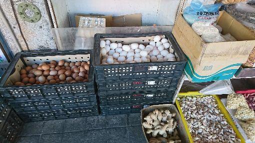 老母雞苦撐生蛋  雞蛋價創新高(1)受到107年蛋雞染病,數百萬隻雞暴斃影響,目前多數雞場靠老母雞生蛋,產量大減,7日全國蛋商調漲雞蛋每斤新台幣3元,目前產地價一斤40元,創8年來新高。中央社記者盧太城台東攝  108年1月8日
