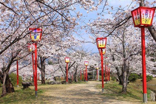 ▲春天賞小城公園的櫻花正是時候 (圖/盈達旅遊)