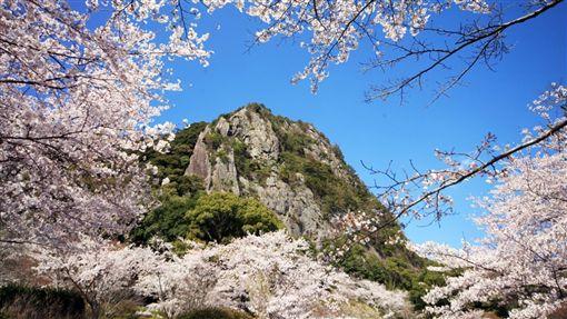 ▲御船山樂園的櫻花在春季時爭妍鬥艷 (圖/盈達旅遊)