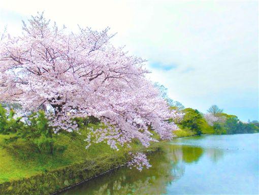 ▲賞櫻勝地─福岡舞鶴公園 (圖/盈達旅遊)
