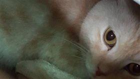 ▲惡劣飼主將貓咪包成包裹快遞棄養。(圖/動保處提供)