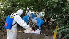 台北市出現麝香豬屍體,檢驗報告出爐,並未檢出感染非洲豬瘟病毒。(圖/台北市動保處提供)