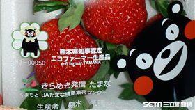 全盛股份有限公司、梅村水菓有限公司進口日本熊本鮮草莓,遭食藥署檢出農藥殘留不符合規定。(圖/食藥署提供)
