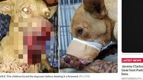 巴拉圭,屁孩,炮竹,流浪狗 https://www.dailystar.co.uk/news/world-news/750355/animal-cruelty-dog-paraguay-san-lorenzo-south-america-world-news