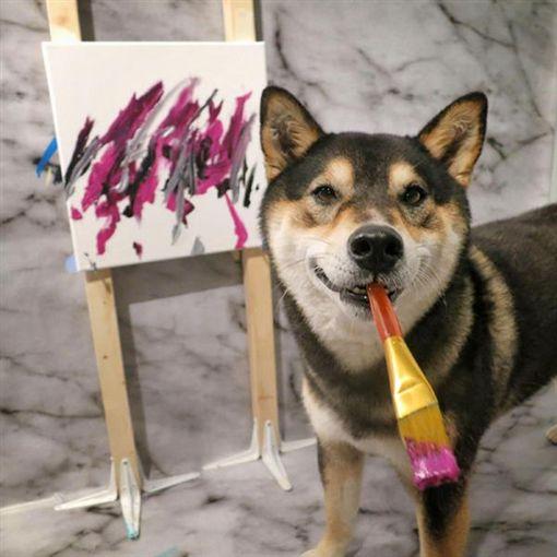 ▲加拿大柴犬Hunter(圖/翻攝網路)