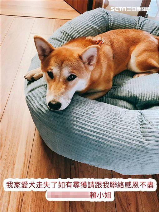 陳意涵,愛犬,脫逃,新北,翻攝臉書
