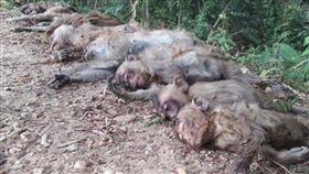 泰國,彌猴,慘死,毒死,下毒,西瓜,覓食,農作物,破壞, 圖/翻攝自泰國網