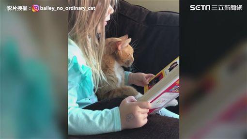影片授權:IG@bailey_no_ordinary_cat