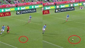 球場「散步鴿」慘遭踢爆 網酸內馬爾  足球,鴿子,衰,踢爆,澳洲甲  翻攝自臉書Hyundai A-League