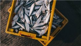 海鮮,魚類,鮮魚 圖/pixabay