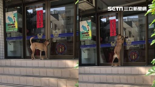 清水警分局光華所警犬「憨吉」/光華派出所提供
