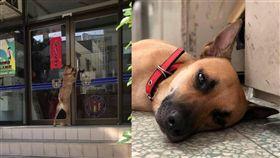清水警分局光華所警犬「憨吉」/光華派出所提供、翻攝自光華一匹狼臉書