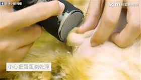 細心幫小貓除私密處毛髮。(圖/好味小姐 Lady Flavor臉書授權)