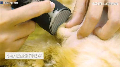 細心幫小貓除私密處毛髮。(圖/好味小姐 Lady Flavor臉書授權) ID-1735150