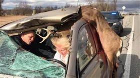 美國,野鹿,車禍,開瓶器,車頂(圖/翻攝自The Hunting Public臉書)