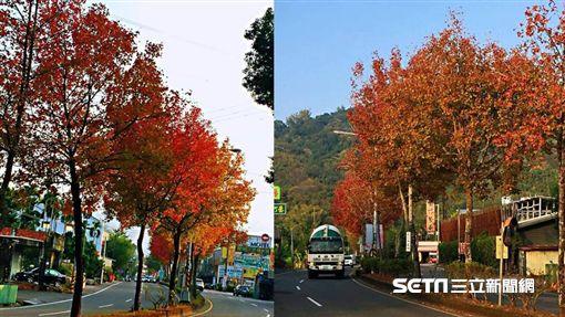 南投竹山鎮省道台三線楓紅、楓樹