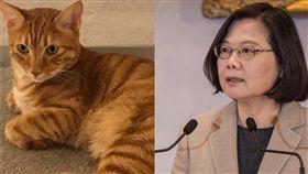 蔡英文總統表示睡前愛貓「蔡阿才」都會陪她看電視。(圖/翻攝自臉書)