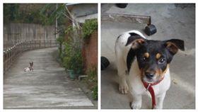 網友用GOOGLE查街景發現過世十年的愛犬。