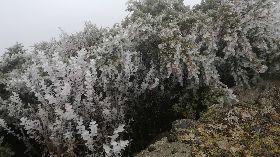 玉山水氣不足 初雪仍未到僅現霧淞