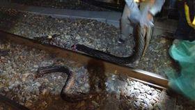蟒蛇爬過南迴鐵道遭斷三截。圖/翻攝畫面