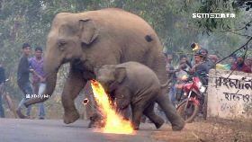 印彈燒大象1800