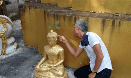 泰國帕夭府(Phayao)一間寺廟內,有一尊佛像後腦長出了「4片葉子」的小菩提樹。不少信眾見狀後,紛紛直喊「佛祖顯靈!」(圖/翻攝自thaiheadlines)