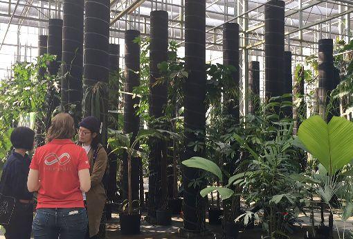 辜嚴倬雲植物保種中心收藏逾3萬種植物活體屏東辜嚴倬雲植物保種中心資深蒐藏經理陳俊銘表示,保種中心共有35名專業人員,負責17棟溫網室與2棟恆溫房,目前已收藏全世界超過3萬3000多種植物活體。中央社記者郭芷瑄攝 108年1月18日
