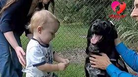 (圖/翻攝自YouTube)美國,虐嬰,保母,忠犬