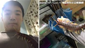 起雞皮疙瘩了!台灣一名男飼主買了一隻有毒的巨大蜈蚣當寵物,從照片上可看到,身長約43公分的蜈蚣直接爬在男子的手臂、胸口上,還津津有味的啃著飼主手上的貓食。不少網友看到後紛紛嚇傻,直喊「太可怕了!」(AP授權)