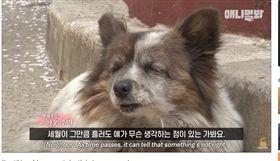 忠犬,韓國,棄養(圖/翻攝自SBS TV동물농장x애니멀봐YouTube)