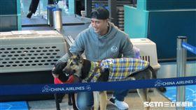▲陳偉殷帶2隻流浪犬飛往美國。(圖/記者蕭保祥攝影)