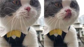 貓咪,怪聲,喵星人,寵物,貓奴(圖/翻攝自9gag Instagram)