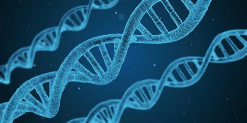 雞,基因編輯,抗流感,英國 (圖/Pixabay)