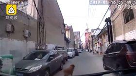 主人昏倒吐白沫…忠犬「當街攔轎」救護車帶路 影片曝光!