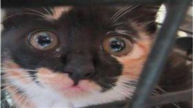 說明 貓咪「眼眶泛淚」呆坐收容所 網友超心疼:怎麼會這樣! 圖/翻攝自臉書