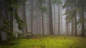 森林王子,迪士尼,失蹤,熊,陪伴,美國,零度,雨,森林 圖/翻攝自Pixabay https://goo.gl/obMYMz