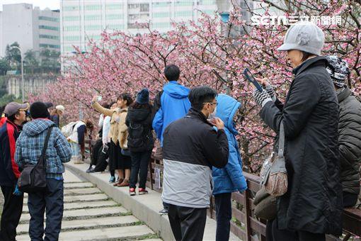 2019樂活夜櫻季,內湖,樂活公園,樂活夜櫻季,櫻花步道,夜櫻,高嘉瑜