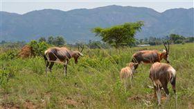 ▲在南非外出時常可見野生動物。(圖/王日昇提供)