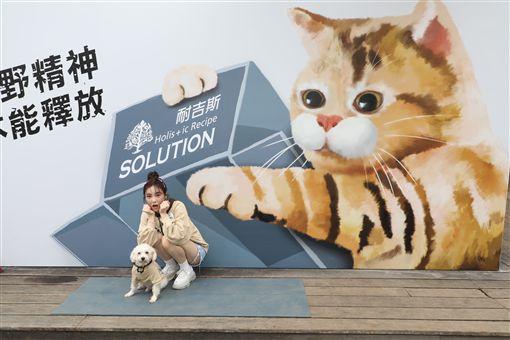 巨型貓狗網紅牆現蹤華山 舒子晨邀您與毛孩一起拍很大