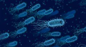 超級細菌,抗生素,抗藥性,死亡,北極,醫療,傳播,衛生 圖/翻攝自Pixabay https://goo.gl/KZZFSZ