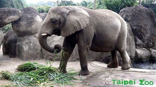 台北市立動物園,大象,林旺,馬蘭,骨骼標本,教育中心地下1樓特展室,動物園