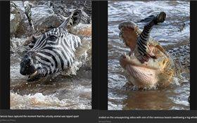 肯亞,馬賽馬拉國家公園,斑馬,鱷魚(圖/翻攝自鏡報)