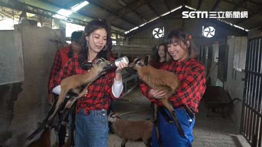 Dash、牧場之花Christy、李懿一起挑戰成為牧場管理員。Dash與李懿搶著替小羊餵奶。享受牧場新鮮牛奶鍋讓Dash與李懿直呼過癮。